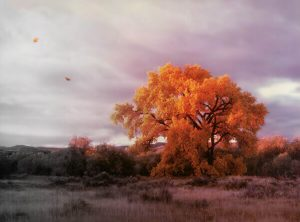 Autumn tree with cloudy sky