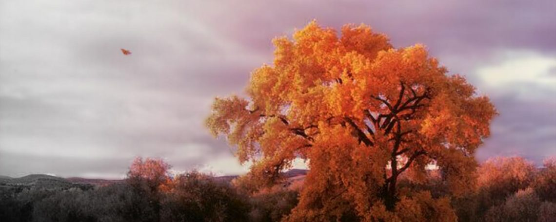 Brightly colored autumn photo